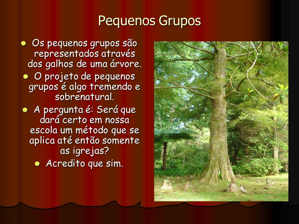 Pequenos Grupos Os pequenos grupos são representados através dos galhos de uma árvore. O projeto de pequenos grupos é algo tremendo e sobrenatural.