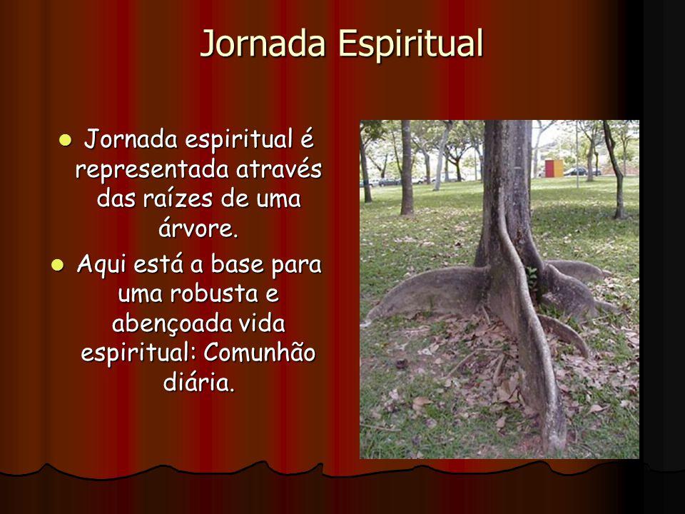 Jornada espiritual é representada através das raízes de uma árvore.