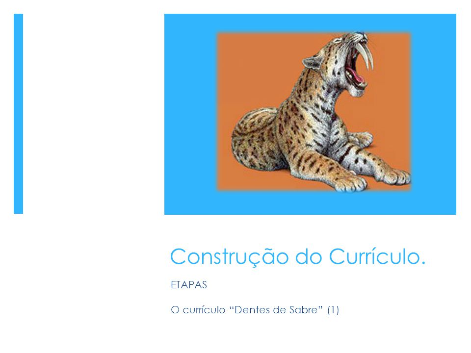 Construção do Currículo.