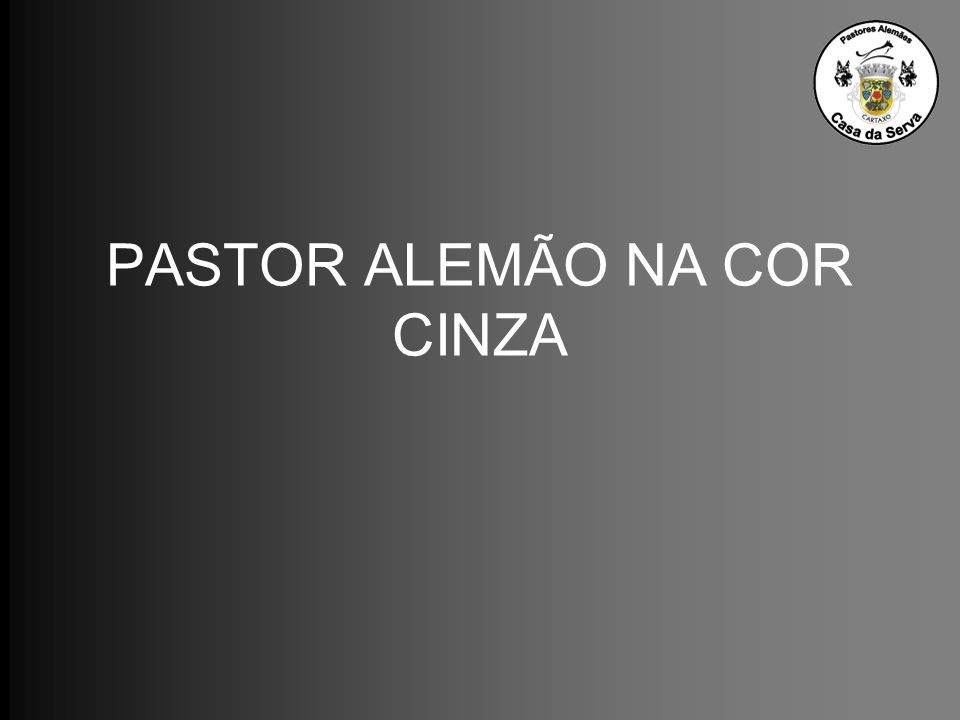 PASTOR ALEMÃO NA COR CINZA