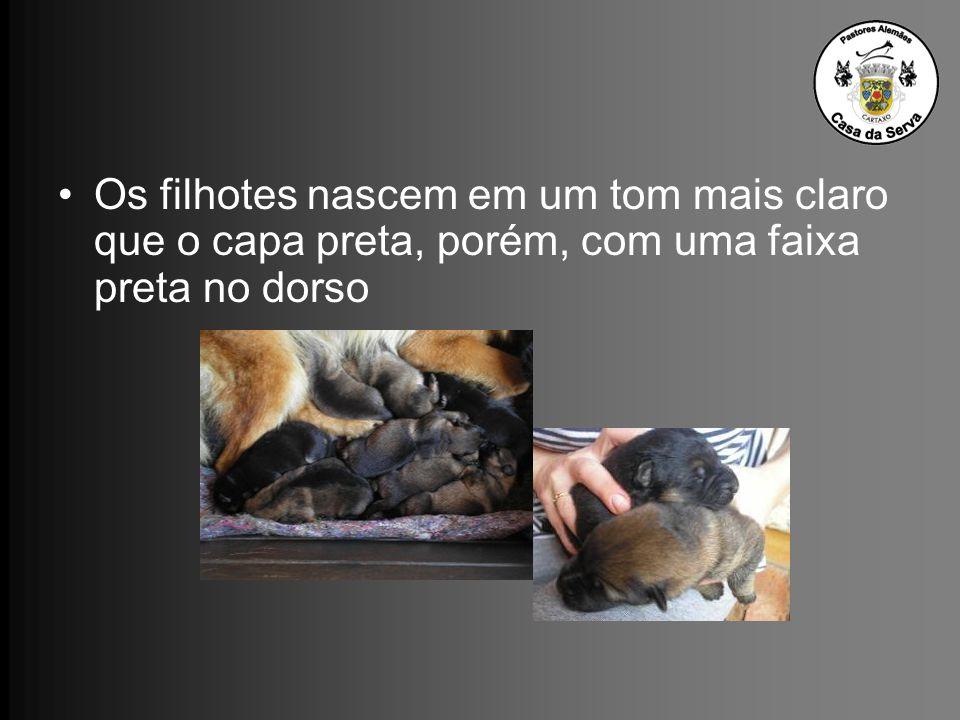 Os filhotes nascem em um tom mais claro que o capa preta, porém, com uma faixa preta no dorso