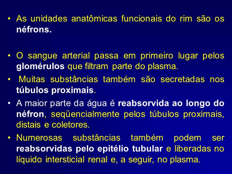 As unidades anatômicas funcionais do rim são os néfrons.