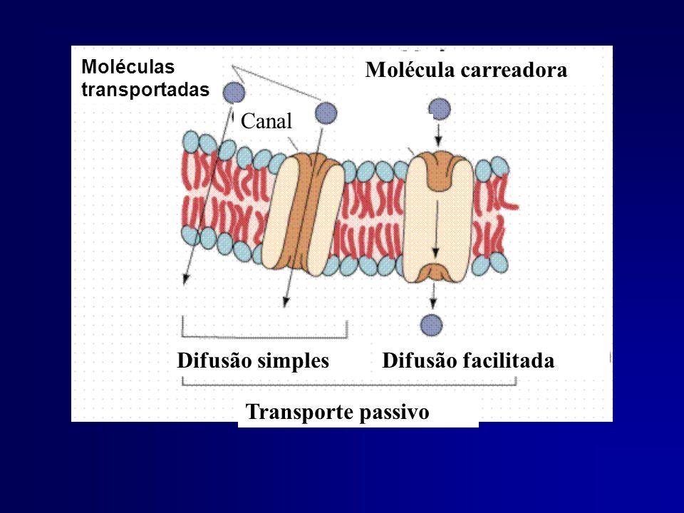Molécula carreadora Canal Difusão simples Difusão facilitada