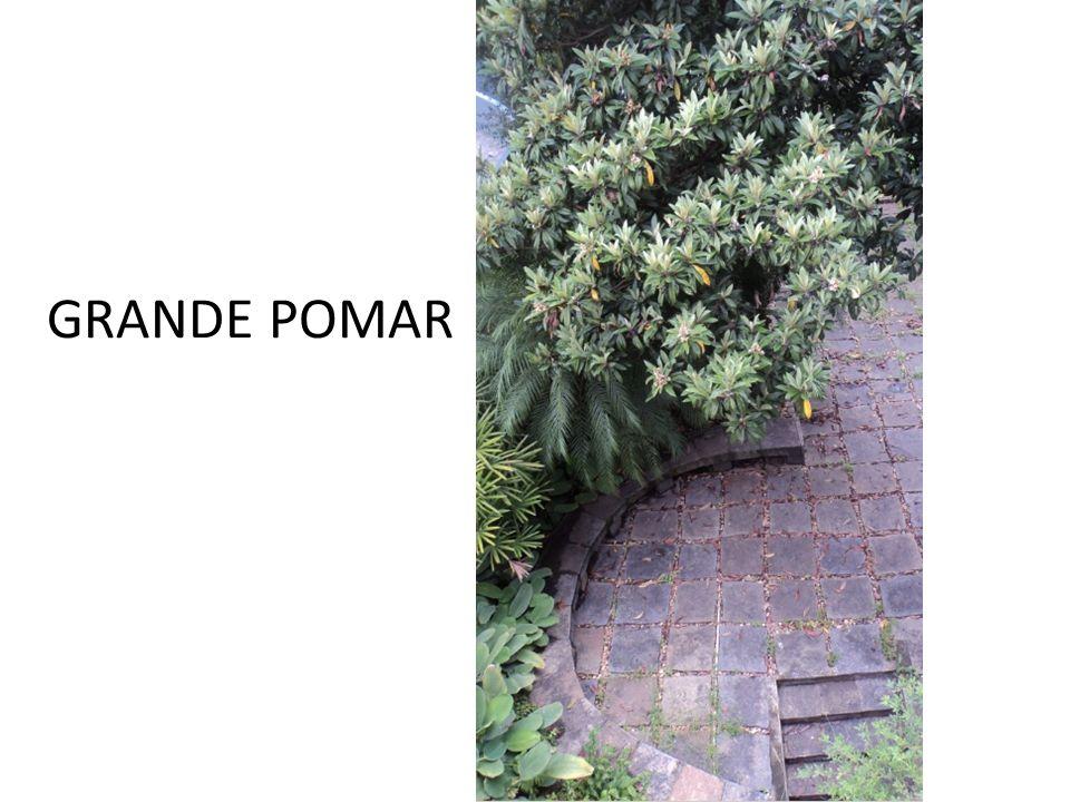 GRANDE POMAR