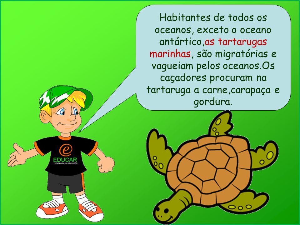 Habitantes de todos os oceanos, exceto o oceano antártico,as tartarugas marinhas, são migratórias e vagueiam pelos oceanos.Os caçadores procuram na tartaruga a carne,carapaça e gordura.