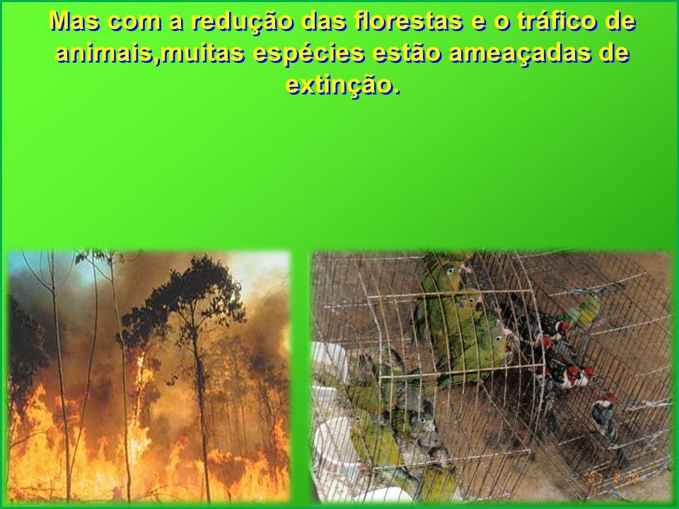 Mas com a redução das florestas e o tráfico de animais,muitas espécies estão ameaçadas de extinção.