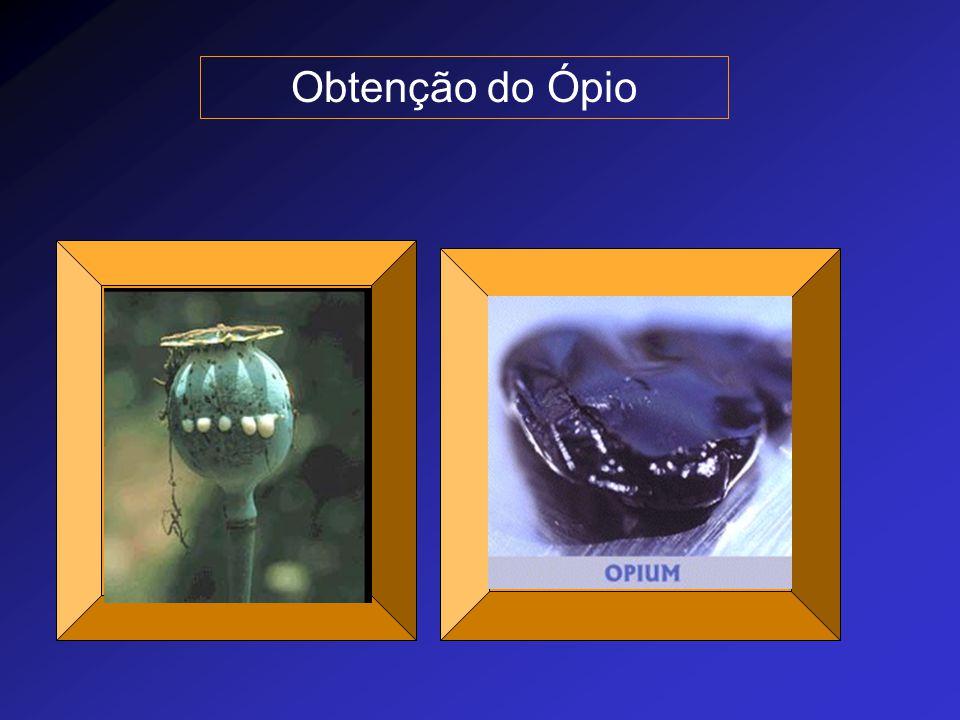 Obtenção do Ópio