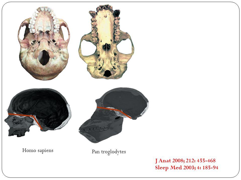 Homo sapiens Pan troglodytes J Anat 2008; 212: 455-468 Sleep Med 2003; 4: 185-94