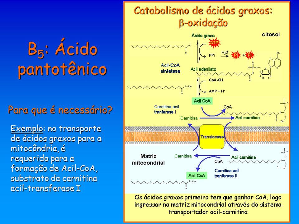 Catabolismo de ácidos graxos: -oxidação