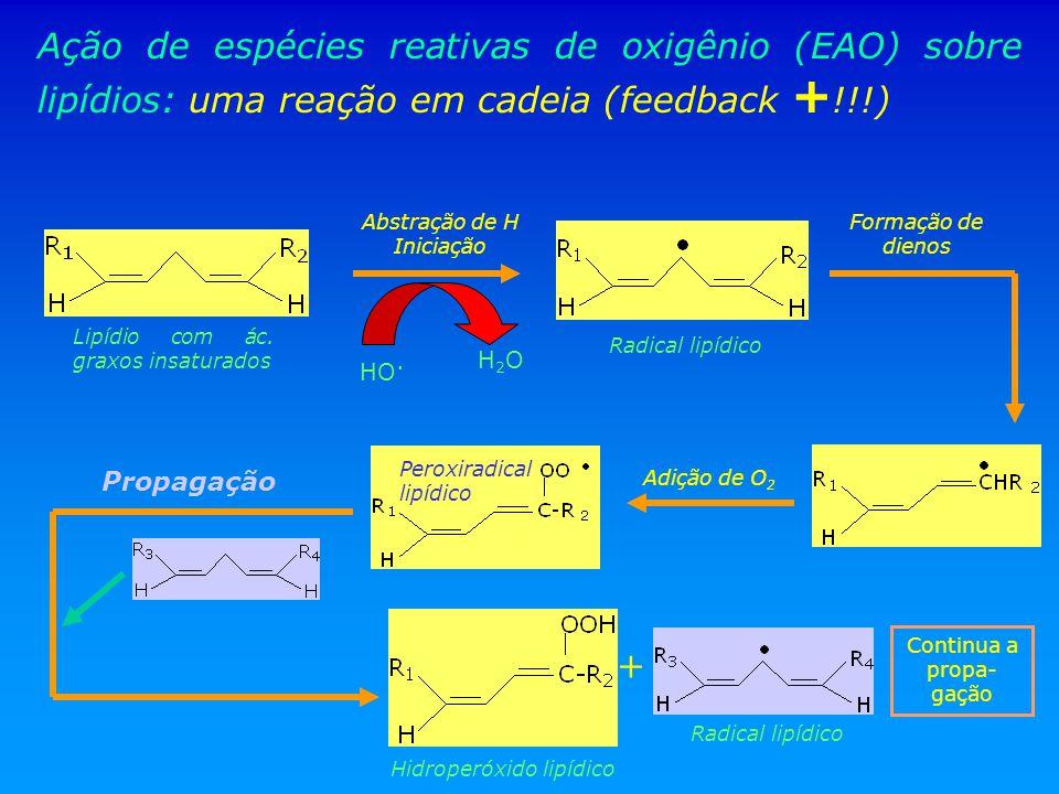 Ação de espécies reativas de oxigênio (EAO) sobre lipídios: uma reação em cadeia (feedback +!!!)