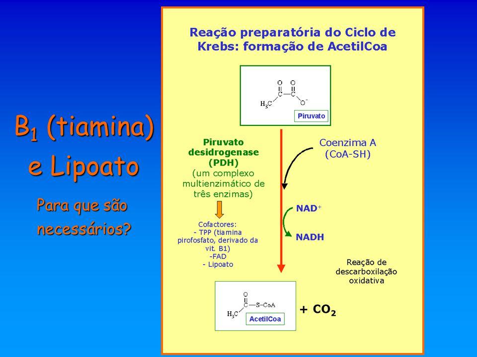 B1 (tiamina) e Lipoato Para que são necessários