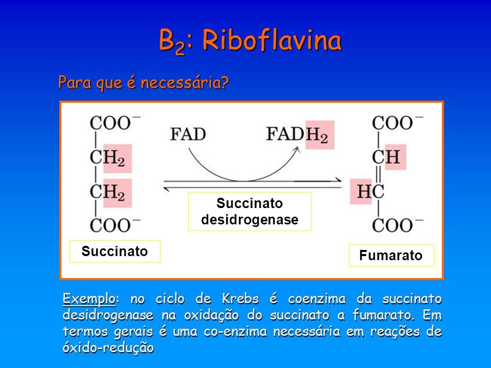B2: Riboflavina Para que é necessária Succinato desidrogenase