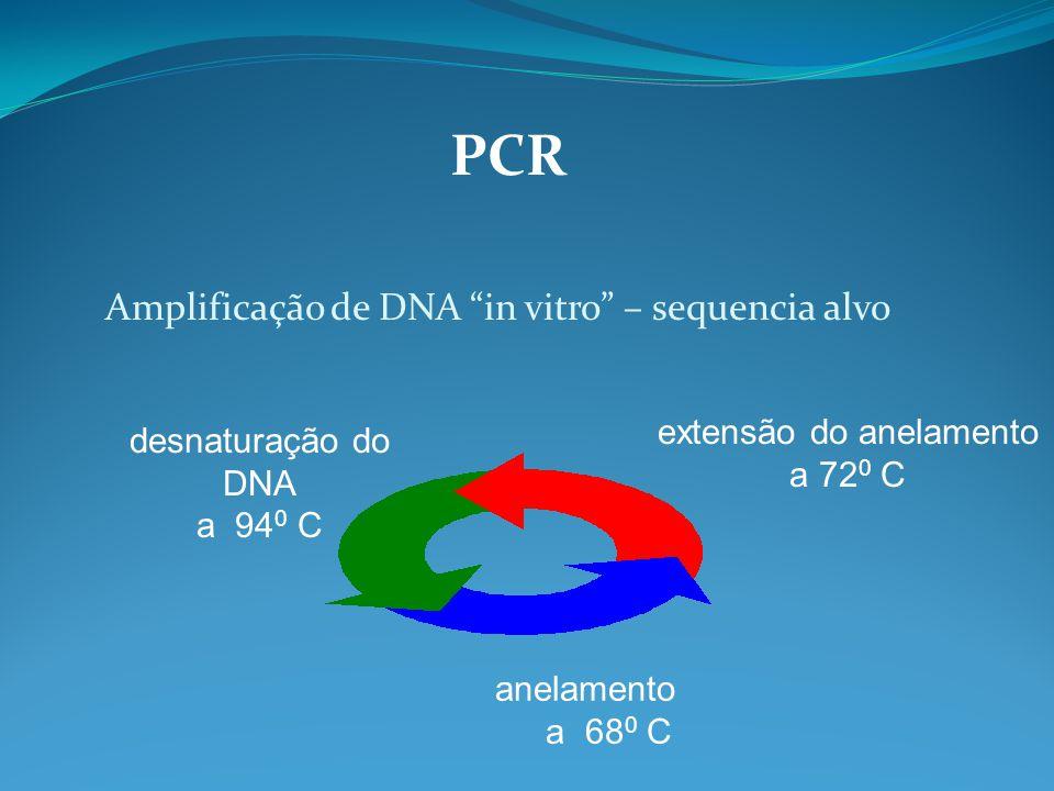 PCR Amplificação de DNA in vitro – sequencia alvo