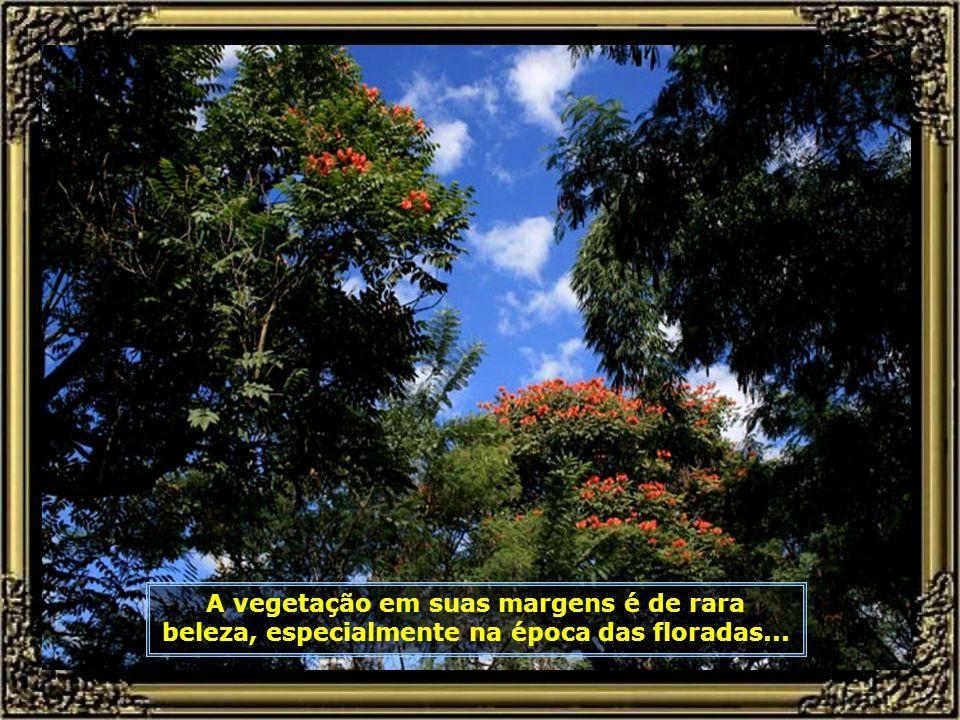 IMG_0681 - PIRACICABA - CAMINHOS FLORIDOS DO ENGENHO CENTRAL-680