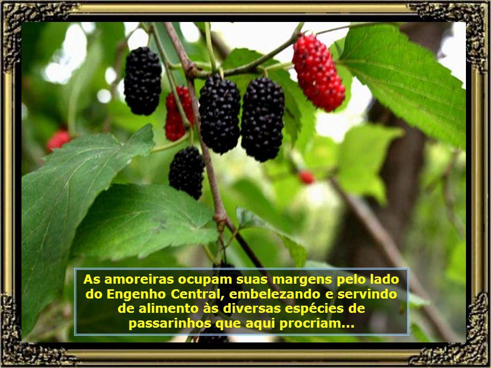 IMG_5562 - PIRACICABA - AMORAS ÀS MARGENS DO RIO PIRACICABA-680.jpg
