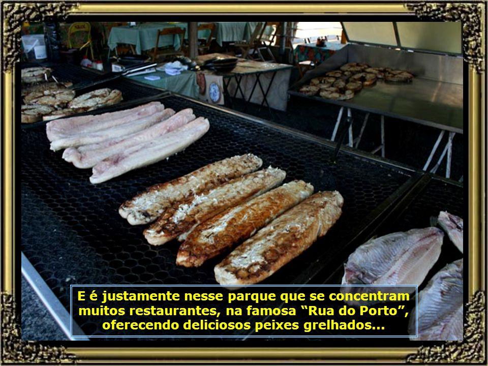 IMG_8091 - RIO PIRACICABA - PEIXE-680.jpg