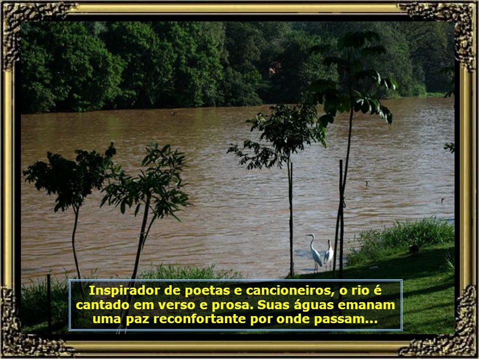 IMG_9506 - RIO PIRACICABA - GARÇAS-680.jpg