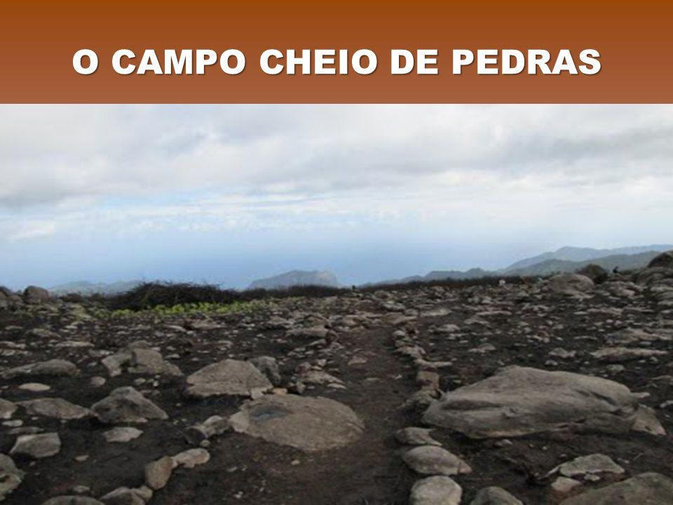 O CAMPO CHEIO DE PEDRAS