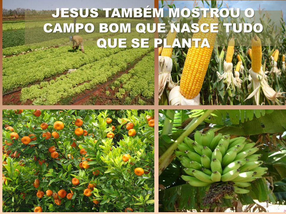 JESUS TAMBÉM MOSTROU O CAMPO BOM QUE NASCE TUDO QUE SE PLANTA