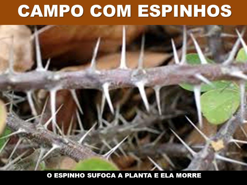 O ESPINHO SUFOCA A PLANTA E ELA MORRE
