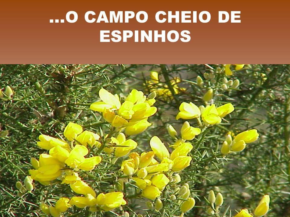 ...O CAMPO CHEIO DE ESPINHOS