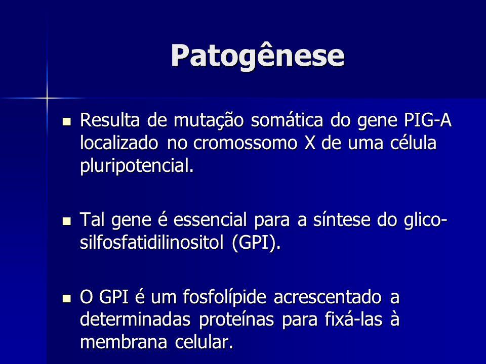 Patogênese Resulta de mutação somática do gene PIG-A localizado no cromossomo X de uma célula pluripotencial.