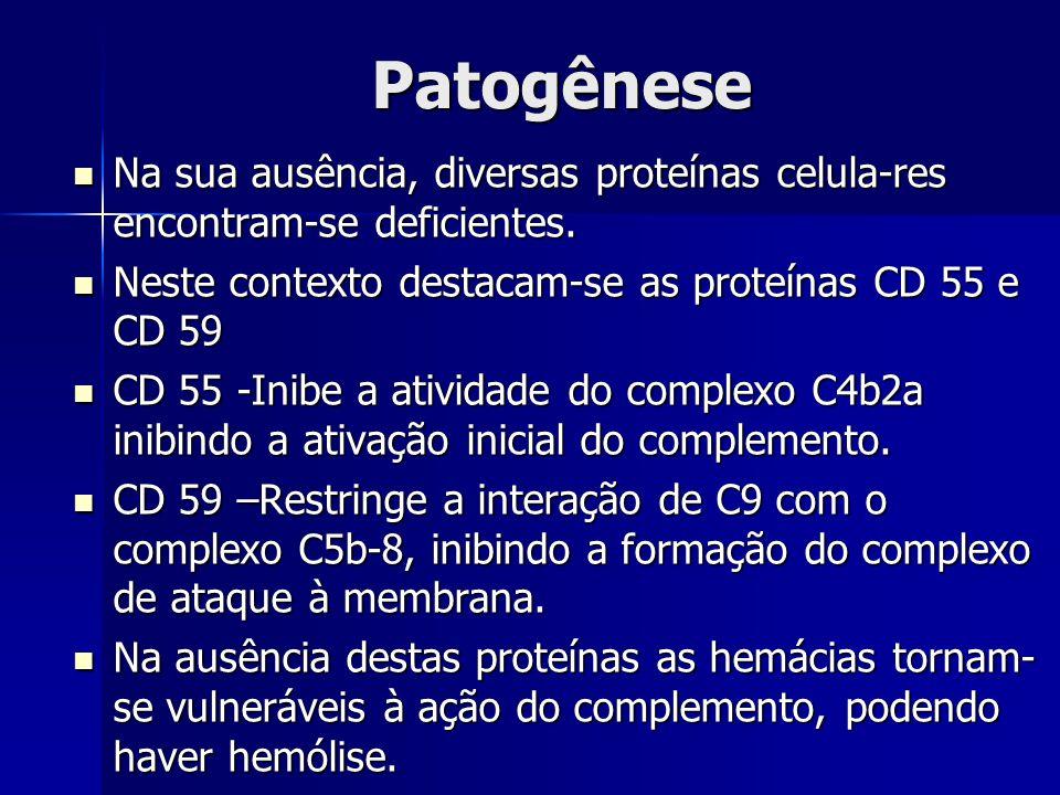 Patogênese Na sua ausência, diversas proteínas celula-res encontram-se deficientes. Neste contexto destacam-se as proteínas CD 55 e CD 59.