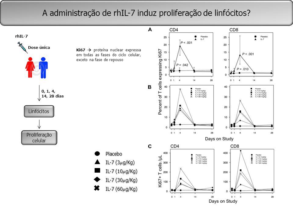 A administração de rhIL-7 induz proliferação de linfócitos