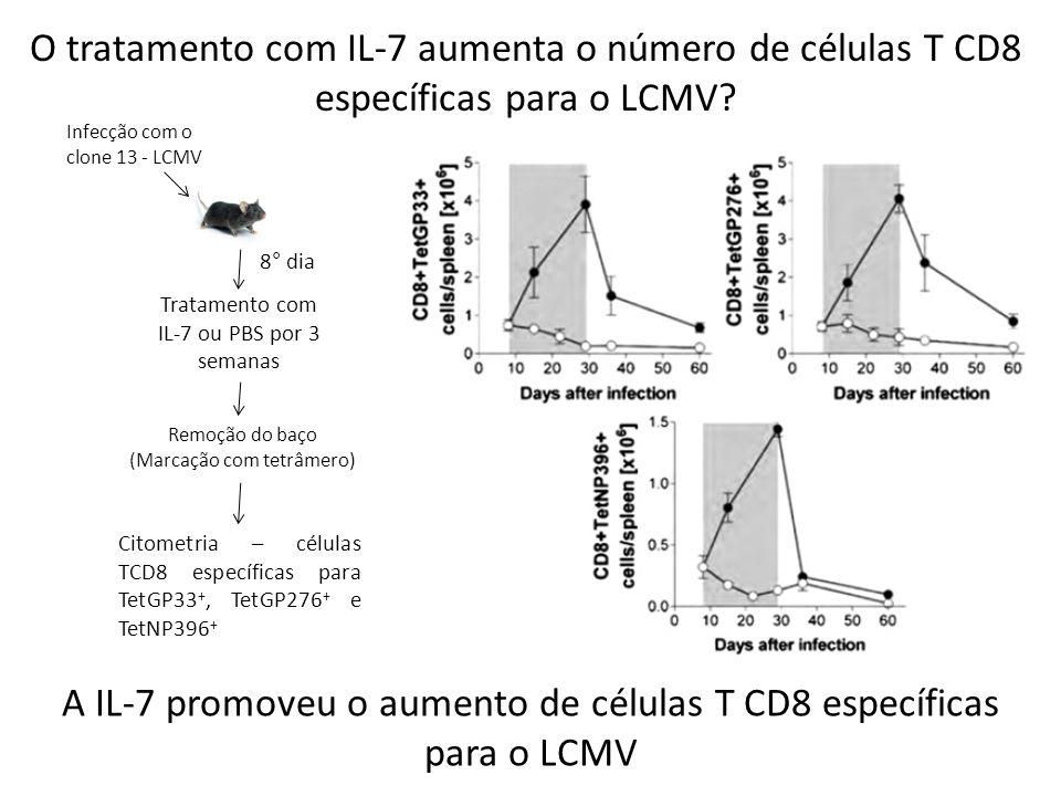 A IL-7 promoveu o aumento de células T CD8 específicas para o LCMV