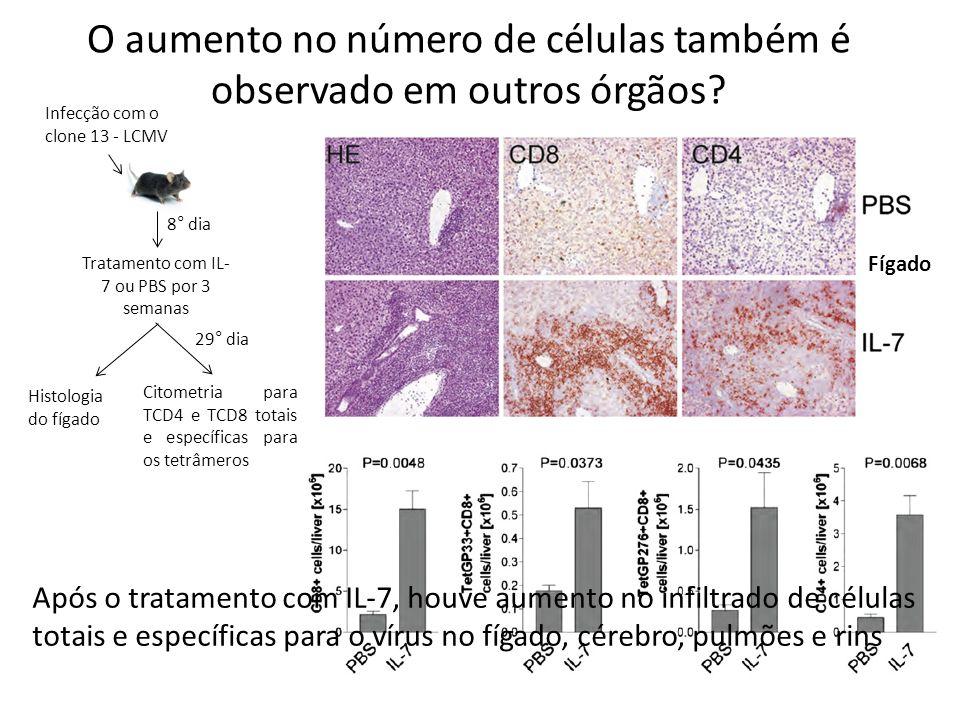 O aumento no número de células também é observado em outros órgãos