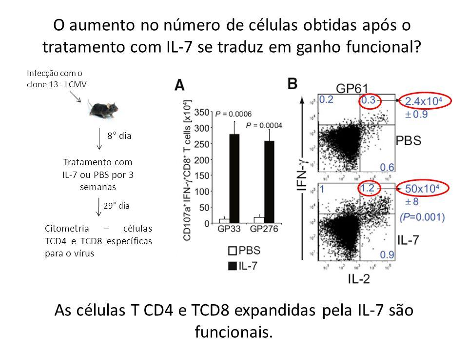 As células T CD4 e TCD8 expandidas pela IL-7 são funcionais.