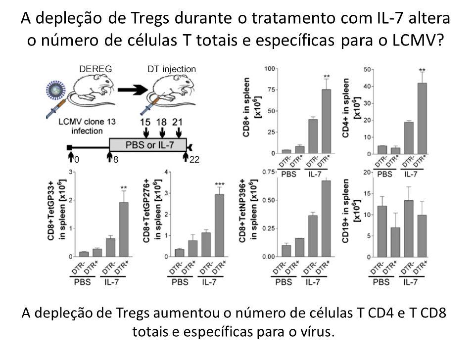A depleção de Tregs durante o tratamento com IL-7 altera o número de células T totais e específicas para o LCMV