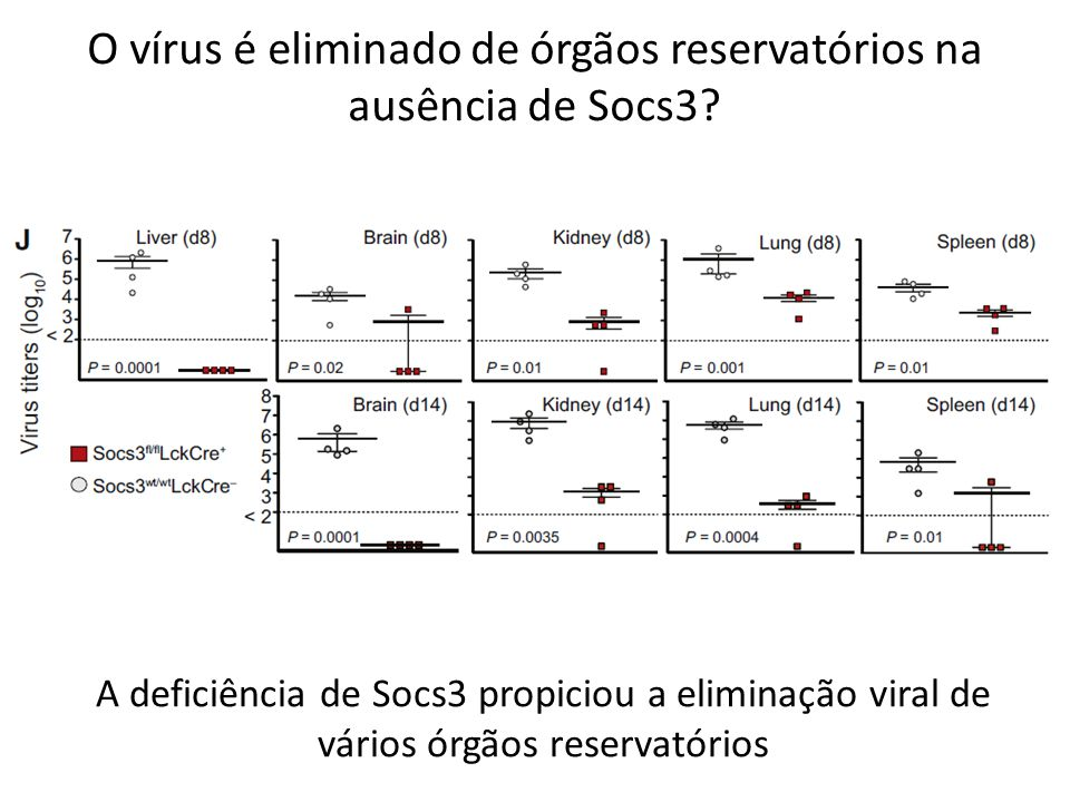 O vírus é eliminado de órgãos reservatórios na ausência de Socs3