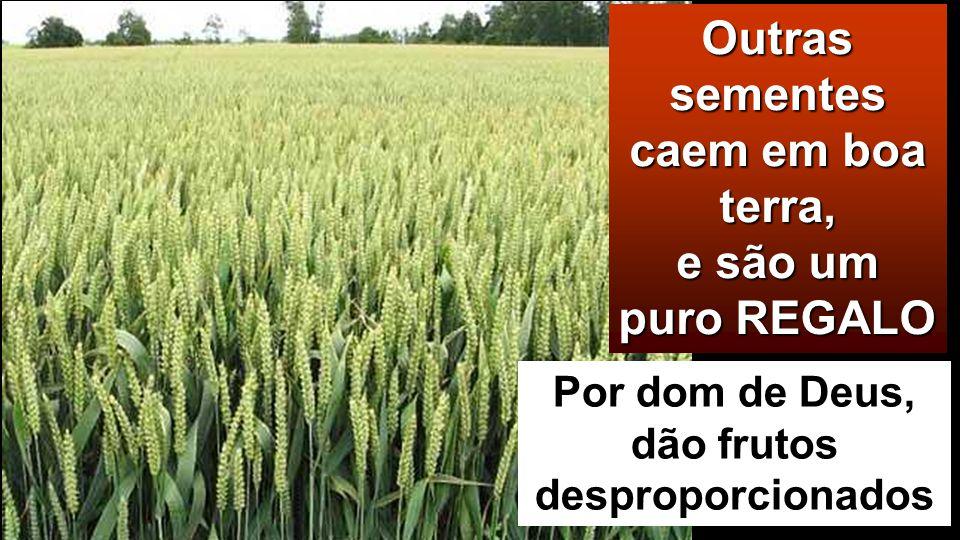 Outras sementes caem em boa terra, e são um puro REGALO