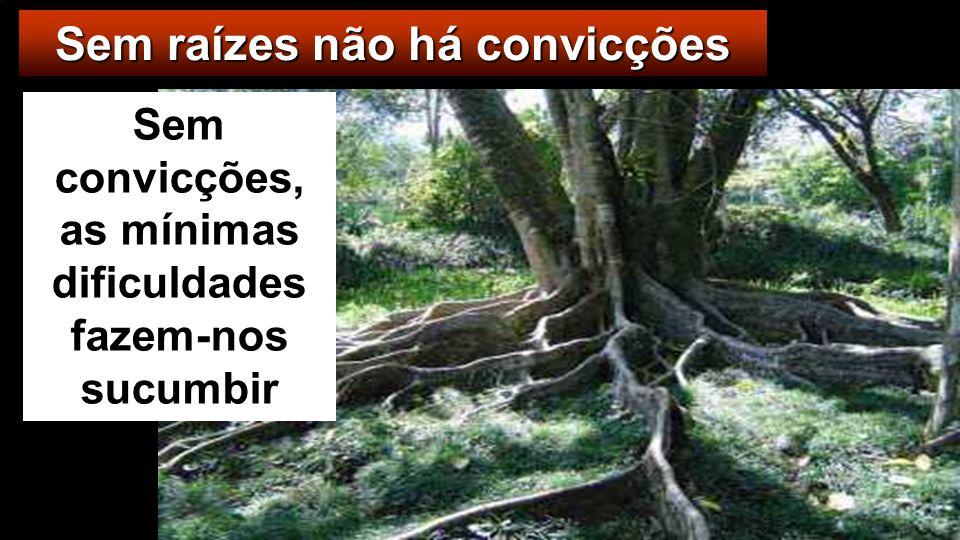 Sem raízes não há convicções