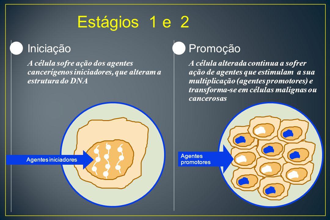 Estágios 1 e 2 Iniciação Promoção 1 2