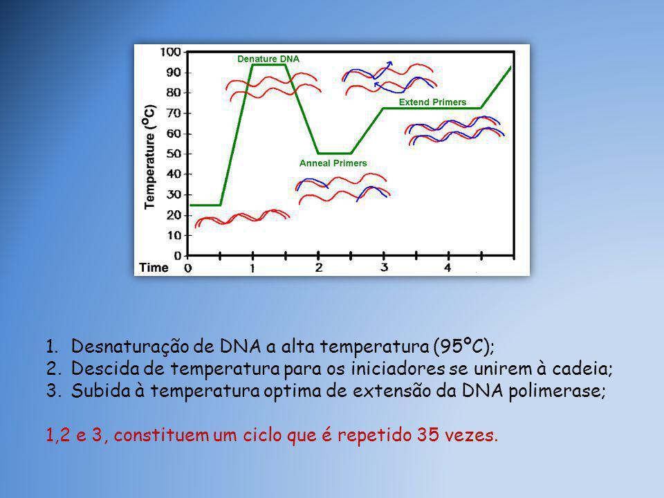 Desnaturação de DNA a alta temperatura (95ºC);