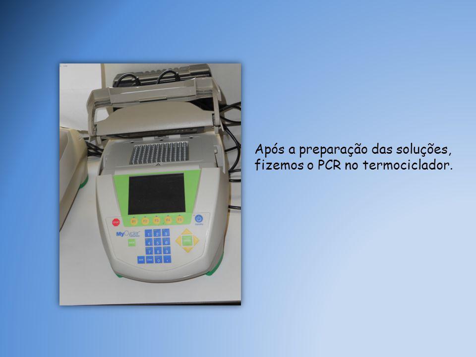 Após a preparação das soluções, fizemos o PCR no termociclador.