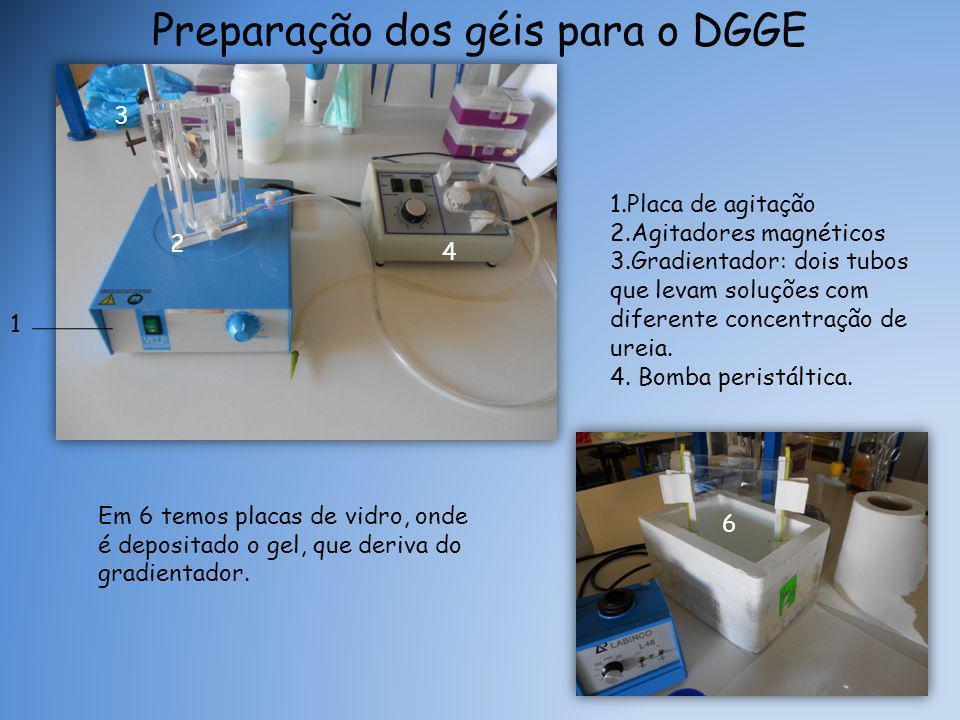 Preparação dos géis para o DGGE