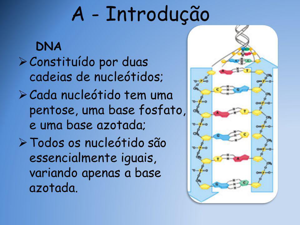A - Introdução Constituído por duas cadeias de nucleótidos;