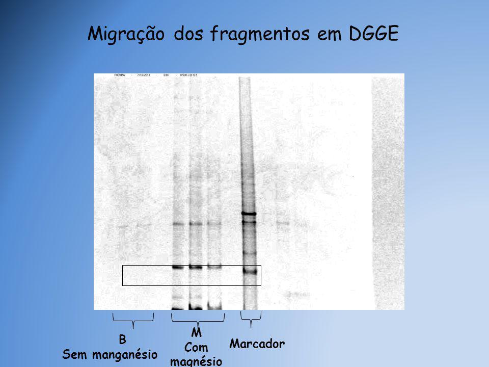 Migração dos fragmentos em DGGE