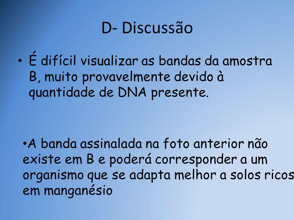 D- Discussão É difícil visualizar as bandas da amostra B, muito provavelmente devido à quantidade de DNA presente.