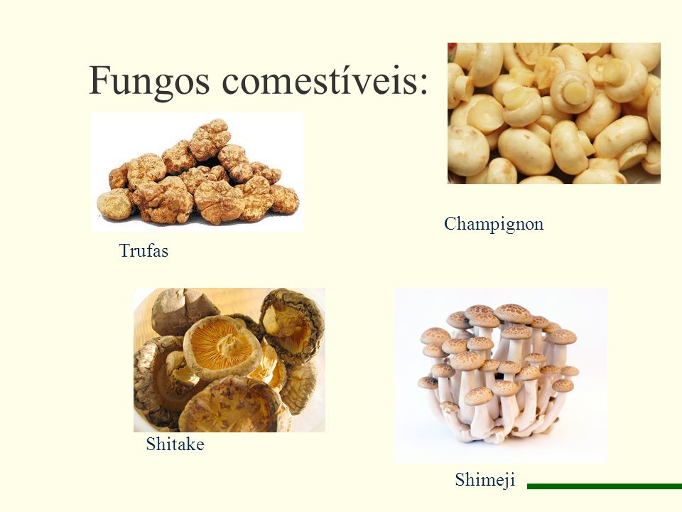 Fungos comestíveis: Champignon Trufas Shitake Shimeji