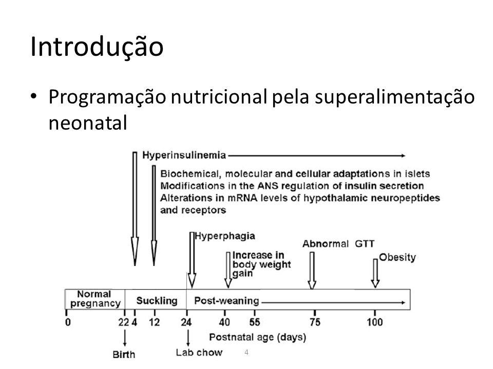 Introdução Programação nutricional pela superalimentação neonatal