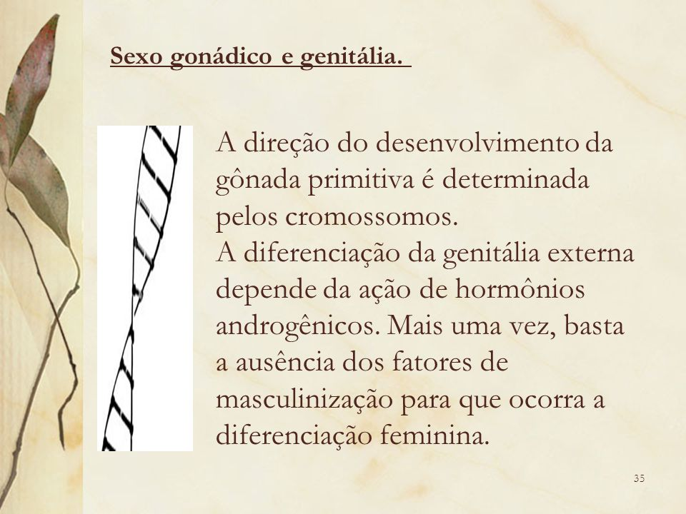 Sexo gonádico e genitália.