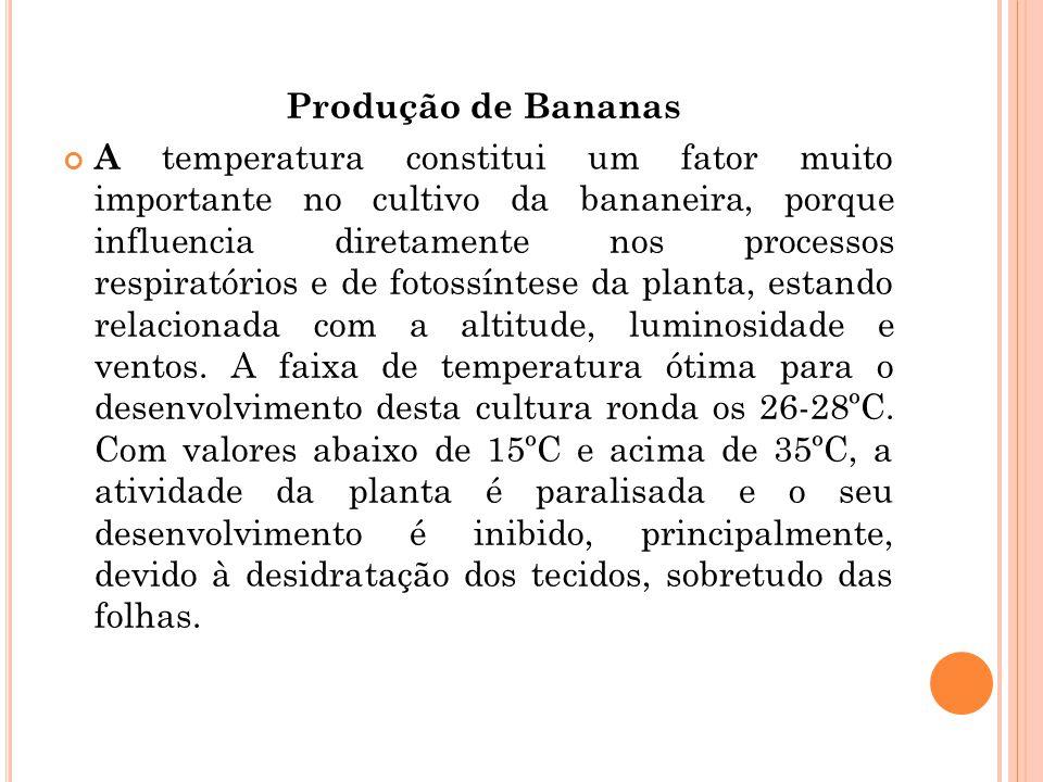 Produção de Bananas
