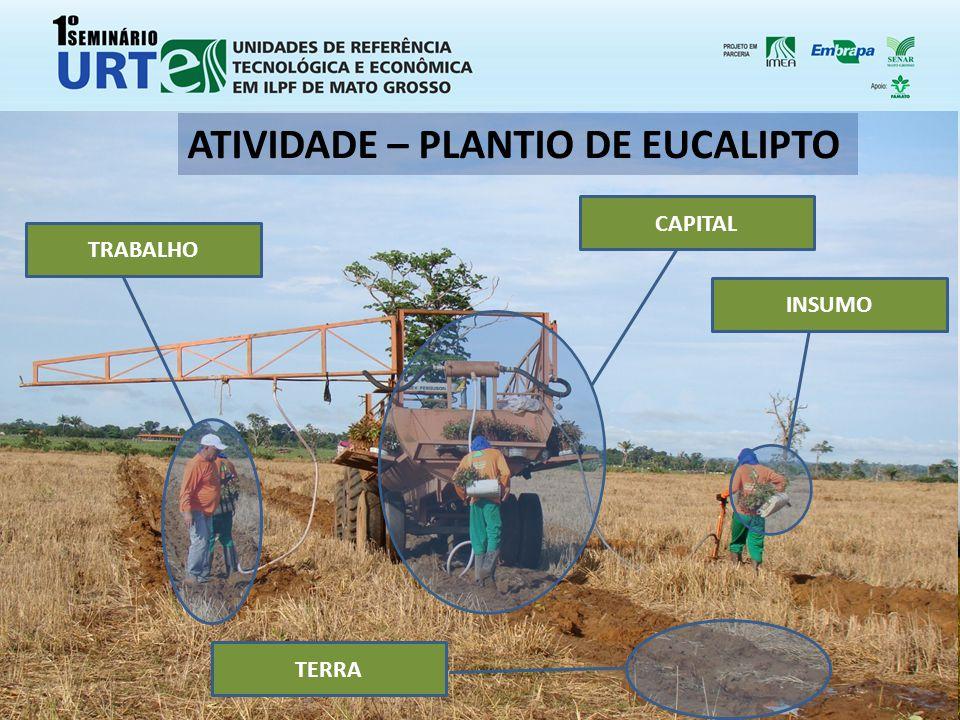 ATIVIDADE – PLANTIO DE EUCALIPTO