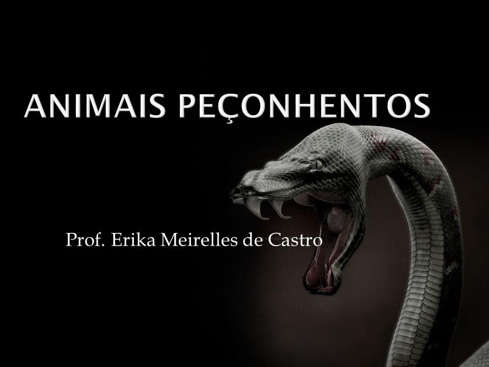 Prof. Erika Meirelles de Castro