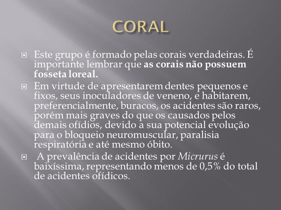 CORAL Este grupo é formado pelas corais verdadeiras. É importante lembrar que as corais não possuem fosseta loreal.