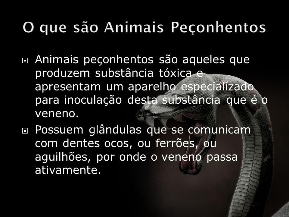 O que são Animais Peçonhentos